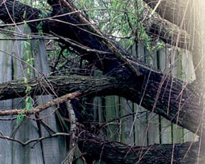 tree damages